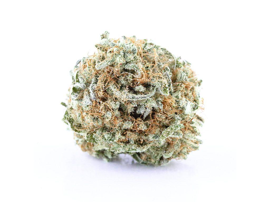 Cannabis bud photography on white background