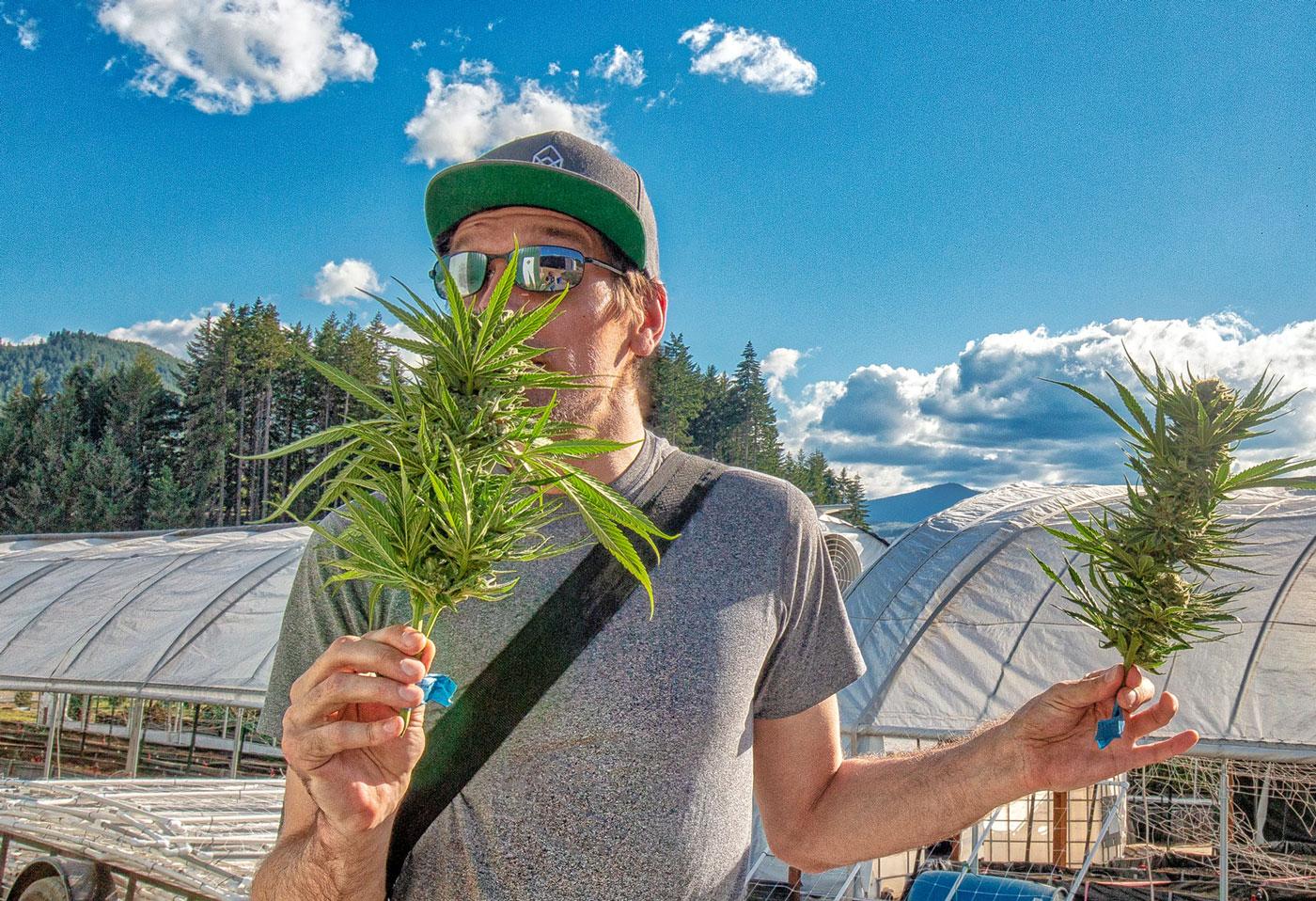 Ryan Michael shooting photography on a cannabis farm